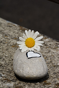 daisy flower on gray stone