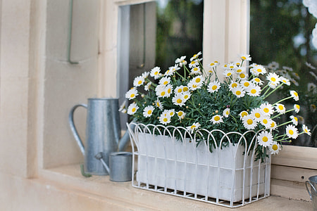 white Daisy and gray watering can