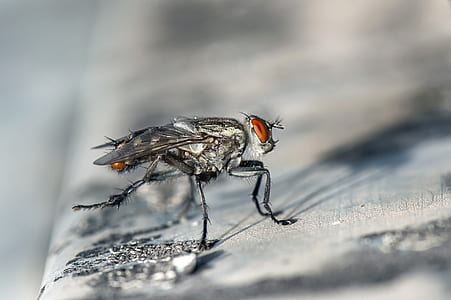 closeup photography of gray housefly on brown board