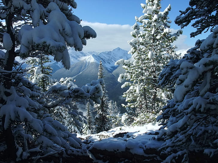 pinetrees with snow during daytime