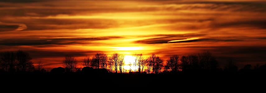 silhouette of leafless trees
