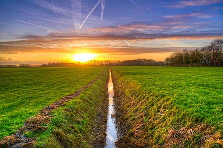 green grass field under orange sunset