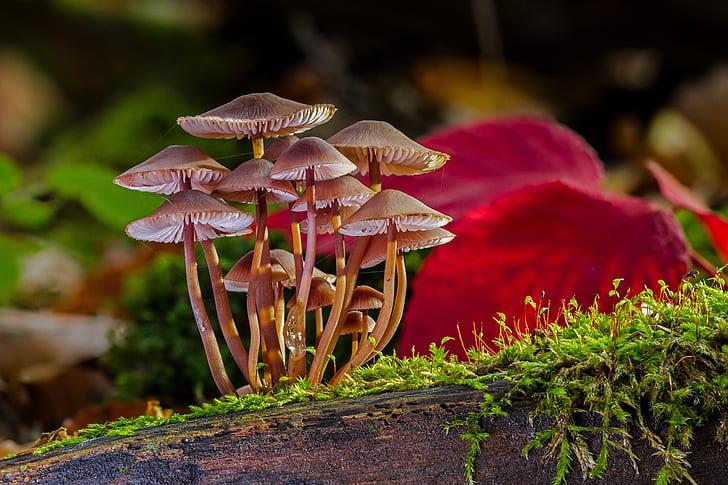 macro shot photography of brown mushrooms