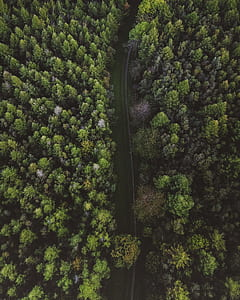 aerial photo of roadway surrounded by trees during daytime