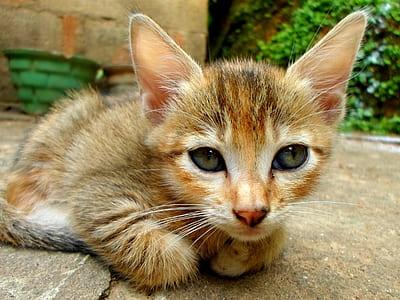 orange tabby kitten lying on gray surface