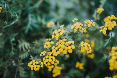 closeup photography of yellow basket of gold flowers