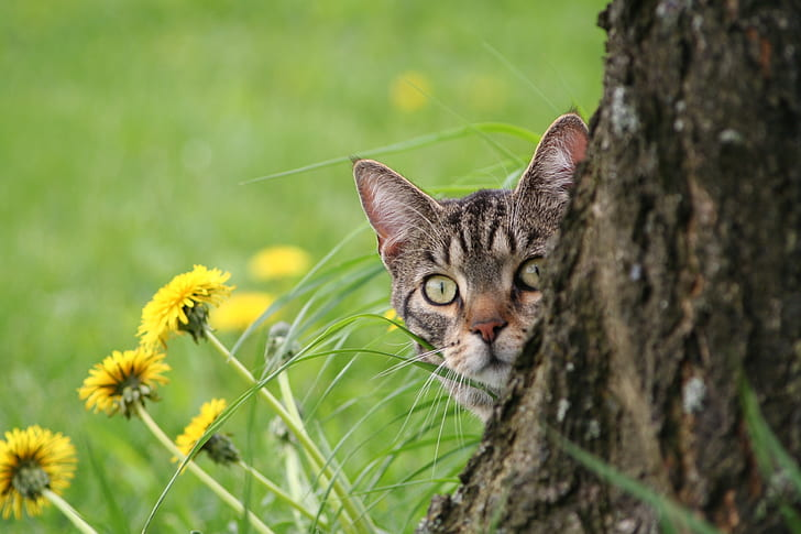 shallow focus photography of cat