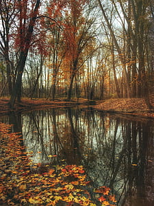 autumn, pond, woods, mysterious, moody, fall