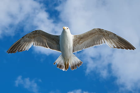 time lapse photography of white seagull flying