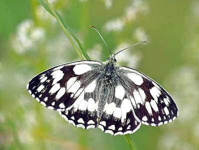 white marbled butterfly in closeup photography