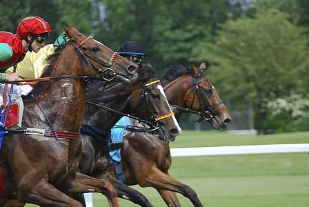 man ride-on horse in field