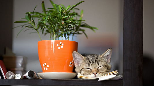 silver tabby cat sleeping beside green potted plant
