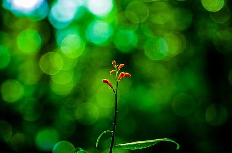 Selective Focus Photography of Orange Petaled Flower