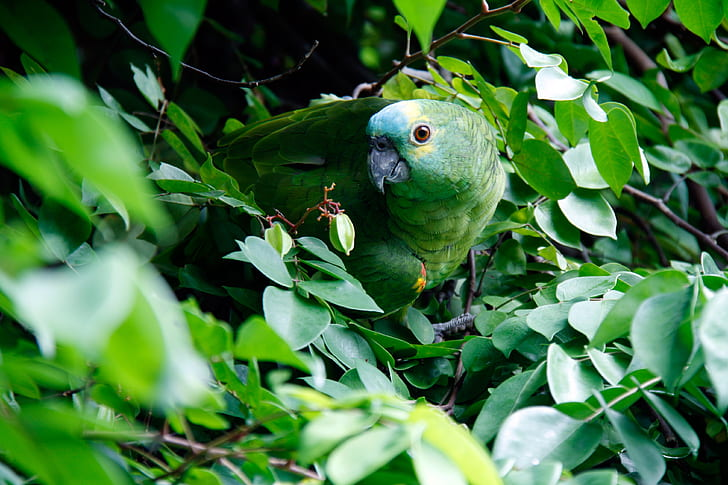 green parrot photography
