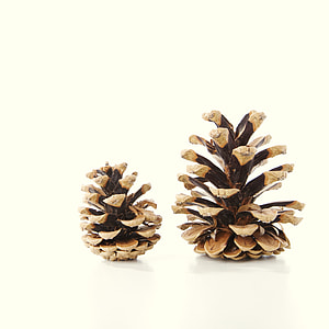 two brown pine cones decor
