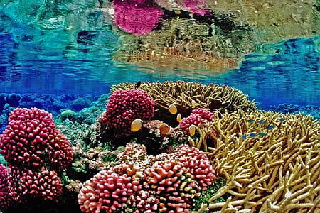 underwater photography of corals