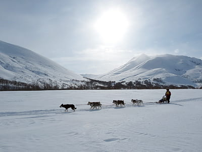 person riding sled pulled by dogs
