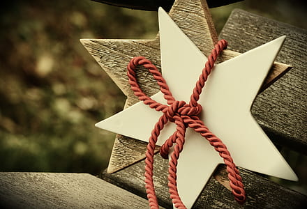 brown and white stars with red rope