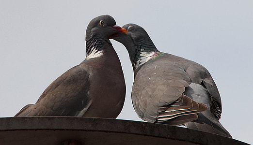 two gray pigeons perched on gray surface at daytime