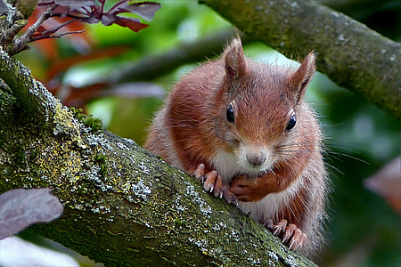 brown and gray squirre