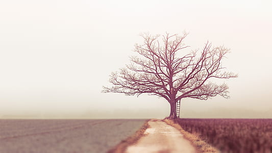 tree in between crop field during fog weather