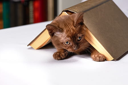 brown kitten and brown soft-bound book