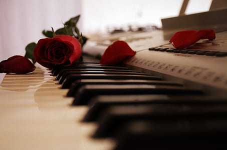 photo of red rose on electronic keboard