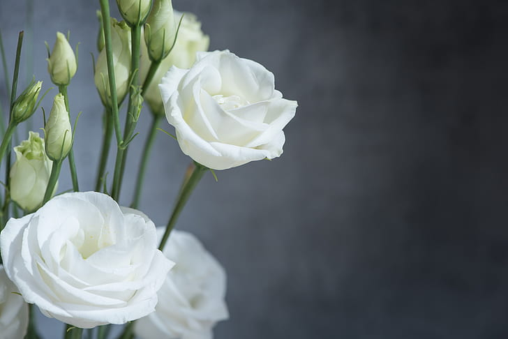 white lisianthus in bloom close-up photo