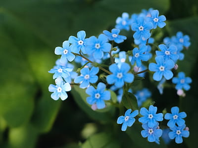 photo of blue petaled flowers