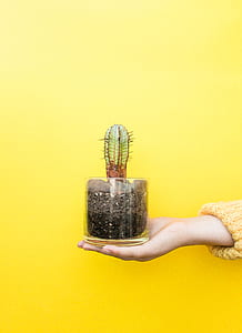 person's right hand holding green cactus on clear glass jar