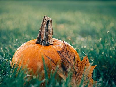 shallow focus photography of pumpkin