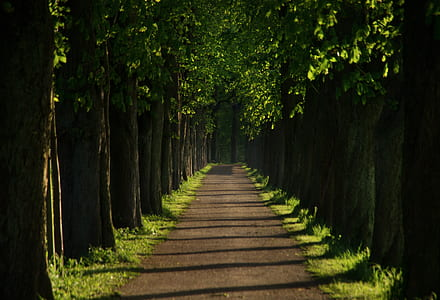 forest walkway during daytime