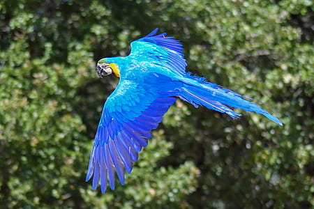 selective focus photography of soaring blue macaw