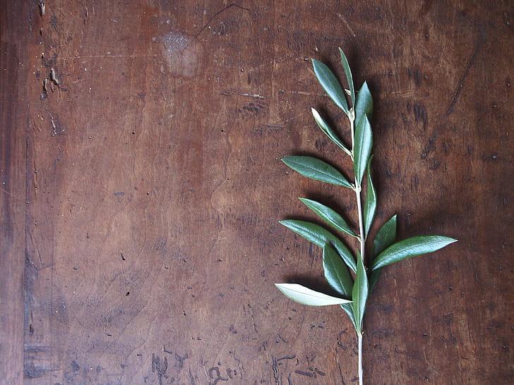 green leaf herb