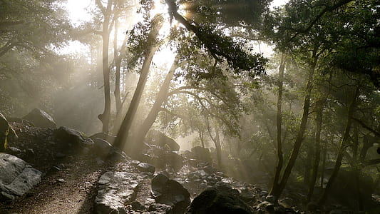 green forest near rocks