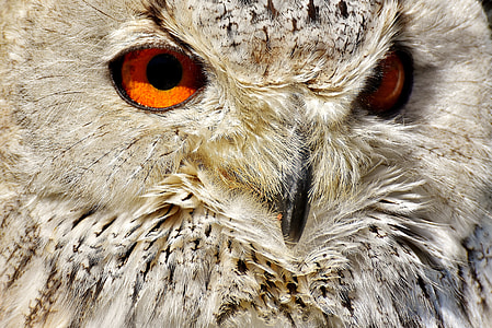 close up photo of beige owl