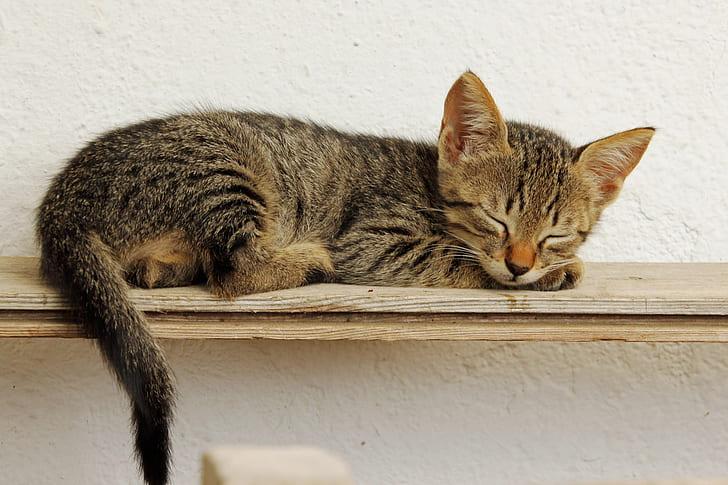 gray tabby kitten sleeping on brown plank