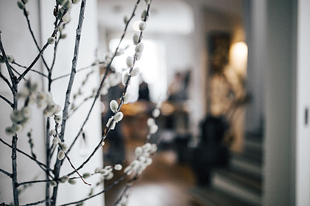 Contemporary interior with catkins