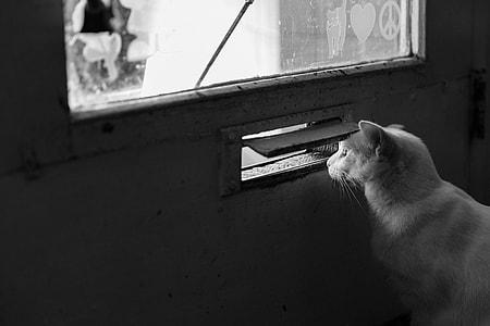 grayscale photo of fur cat near wood-framed glass door