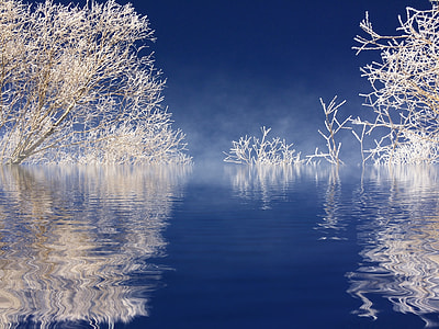 white bare tree branches near water