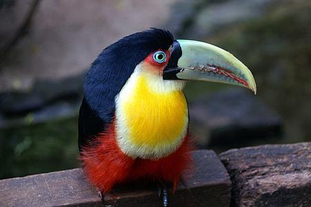 white, yellow, and orange bird