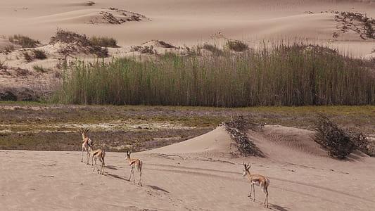 landscape, grass, deer, animal, wild