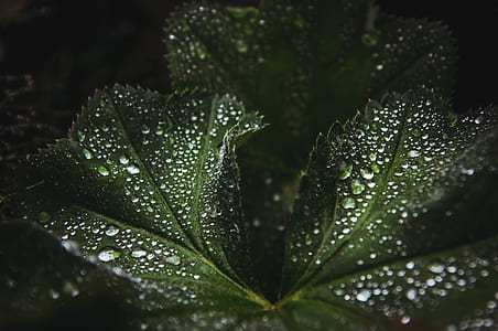 close up photography of dew drops