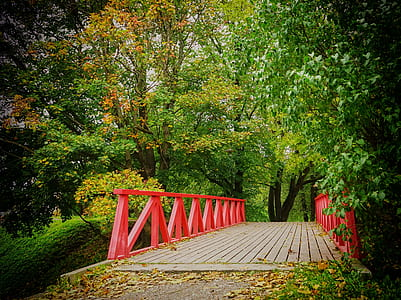 red and brown wooden bridge surrounded by green leaf trees at daytime