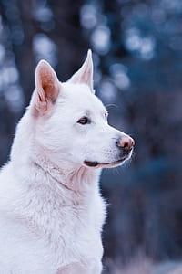 shallow focus photo of medium-coated white dog