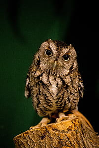 brown and black owl perched on tree