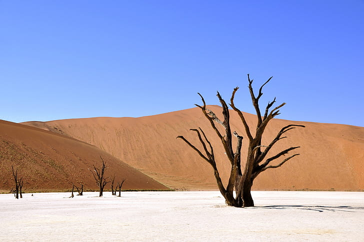tree on white sand during daytime