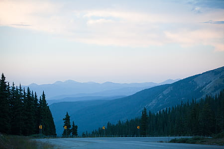 Gray Concrete Road Surrounded by Pine Trees Under Gray Sky