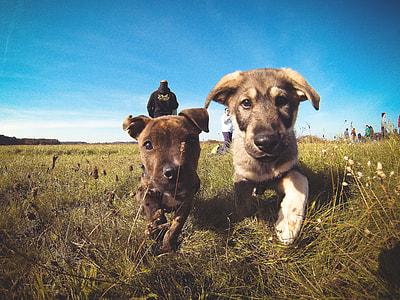 Little Puppies Friends