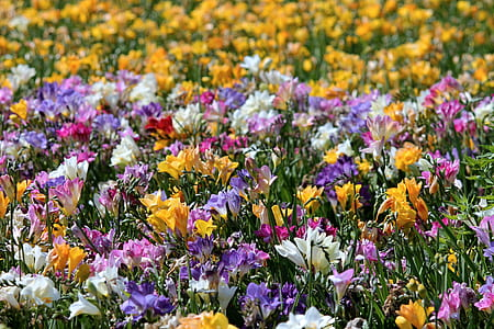 variety of flowers during daytime